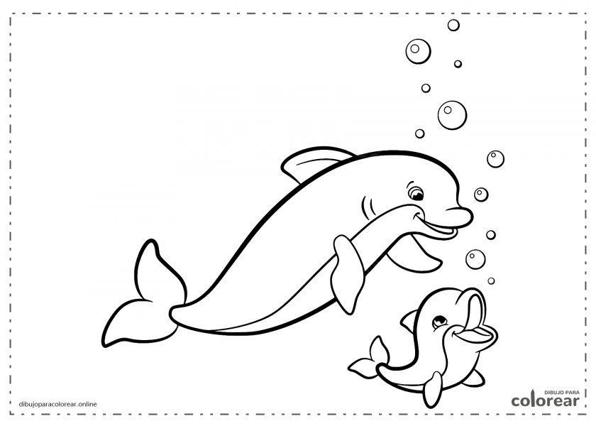 Delfín adulto y su hijo