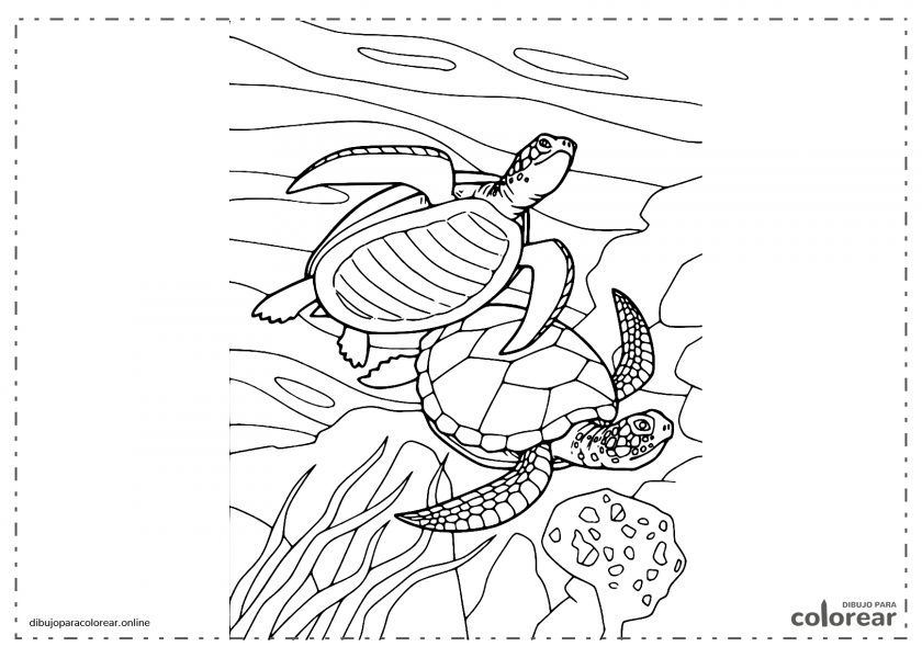 Dos tortugas nadando en el fondo del mar