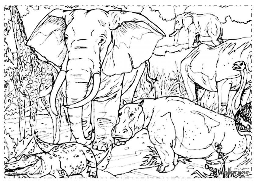 Elefante en la selva con otros animales