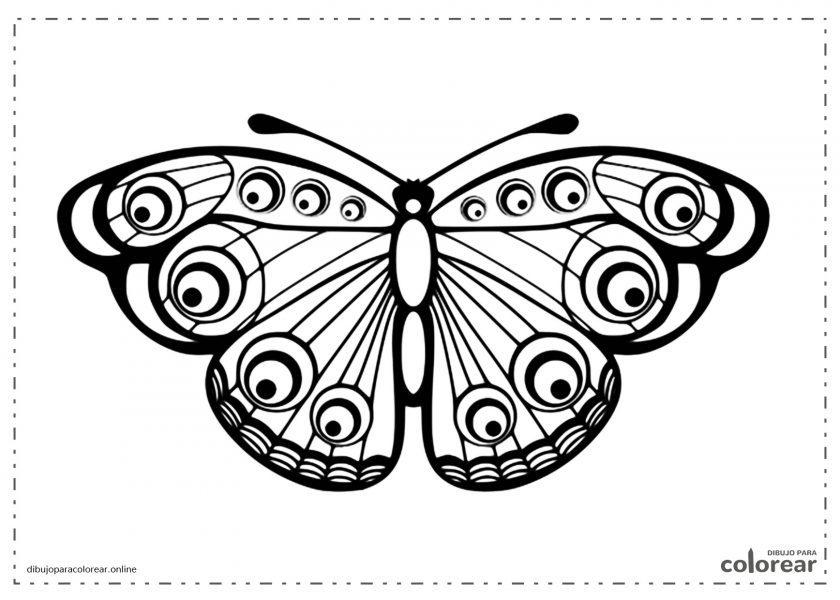 Mariposa con las alas abiertas
