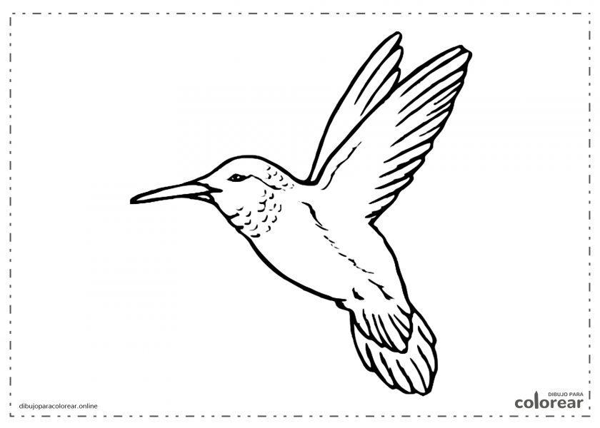 Colibrí batiendo las alas en el aire