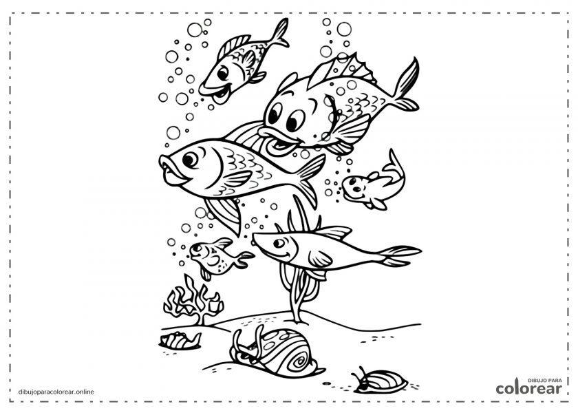 Peces nadando en aguas del mar