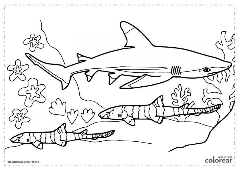 Tiburón nadando con muchos peces y algas en el fondo del mar