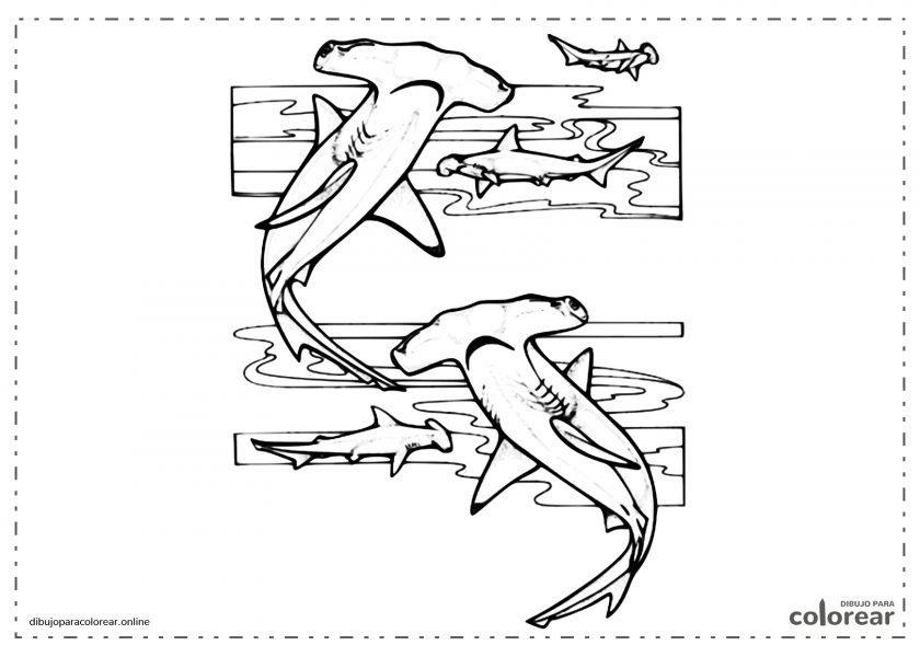 Tiburones martillo nadando en el mar