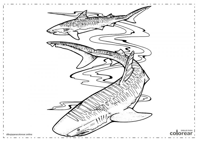 Tiburones nadando en el mar