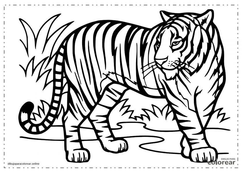 Tigre con sus manchas y rayas en la selva